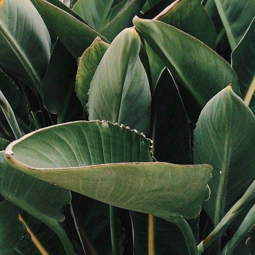 feuilles plante verte